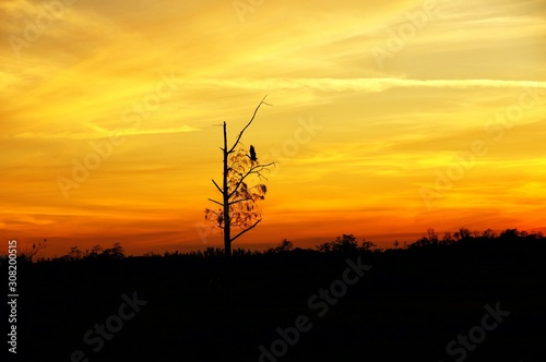 Valokuva silhouette at sunset of a bird on a tree