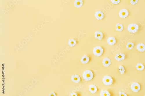 Obraz na plátně White chamomile daisy flowers pattern on yellow background