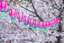 桜とランタン 春イメージ