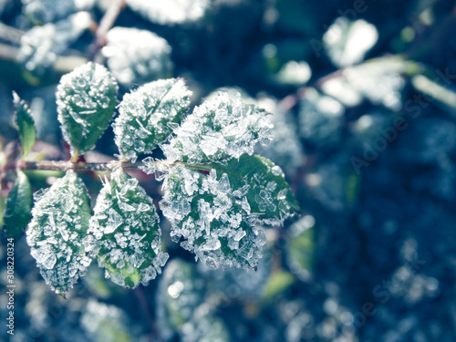 Fototapety, obrazy: winter background with snowflakes crystals patterns and snow on frozen grass