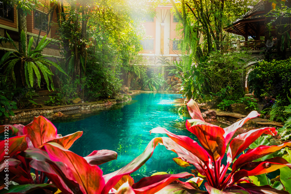 Fototapeta Swimming pool in beautiful nature jungle style under trees and house background at sunshine time, Poolside in natural green garden resort villa