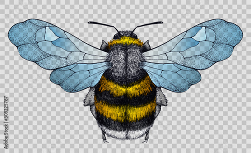 Photo Honey bee tattoo.Illustration on transparent