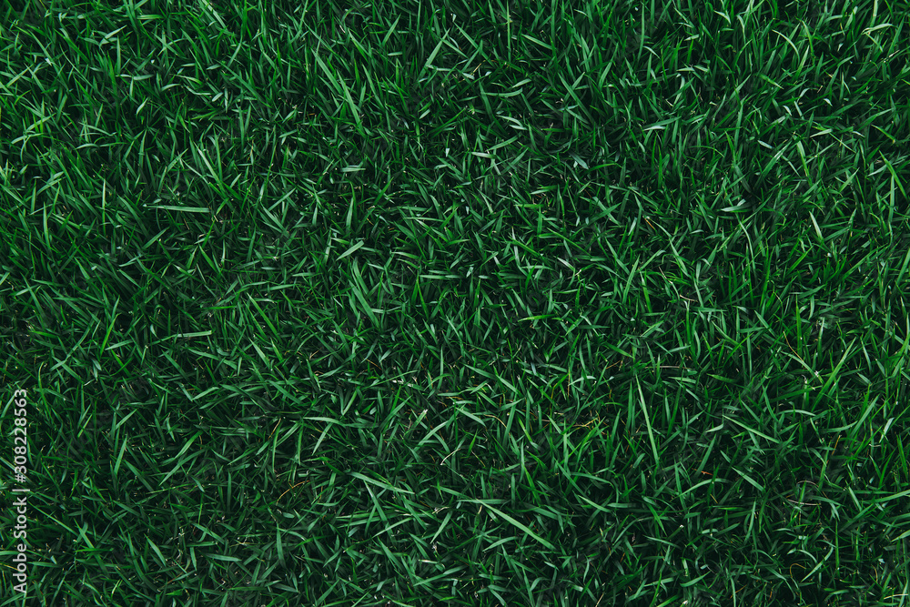 Fototapeta Top view of green grass texture. for background.