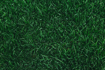 Top view of green grass texture. for background.