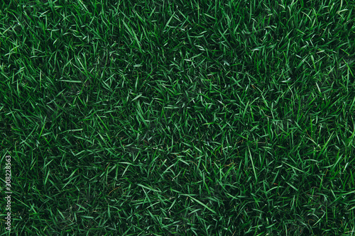 Cuadros en Lienzo Top view of green grass texture. for background.