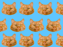 Funny Red Cat Heads On Blue Ba...