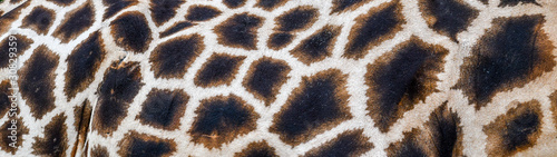 Photo Real giraffe skin or background texture fur