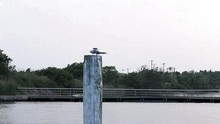 Turn Birds On A Post Above The Water