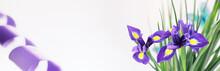 Purple Irises On A White Backg...