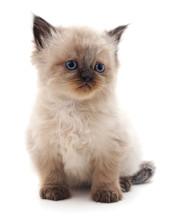One Little Kitten.