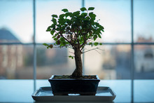 Bonsai Tree In Silhouette With...