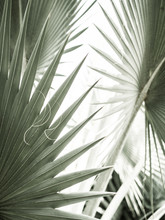 Arty Closeup Picture Of Palm L...