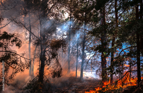 wildfire at sunset, burning pine forest . Fotobehang