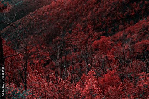 Foto auf Leinwand Kastanienbraun Beautiful orange and red autumn forest