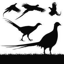 Vector Silhouettes Of Pheasants.