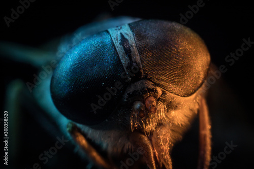 Mixed light. Horsefly or Gadfly or Horse Fly Diptera Insect Macro. Selective focus.
