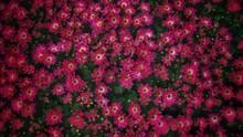 Closeup Image Of Beautiful Flowers Wall Background