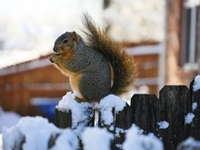 Medium Close Up Of A Squirrel ...