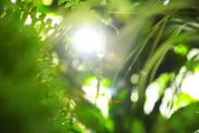 Blurred View Of Green Plants As Background, Bokeh Effect