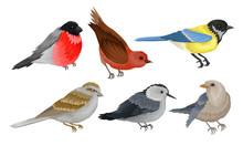 Wild Birds Collection, Titmous...