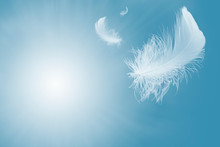 Soft White Feather Floating In...