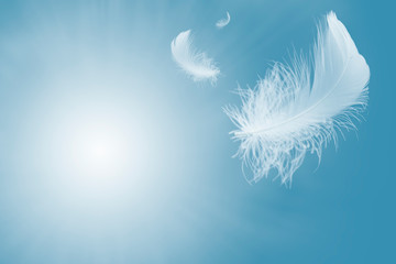 Soft and light of fluffy a white feather floating in the sky. Feather abstract freedom flying concept background.
