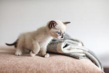 Kitten Is On The Sofa
