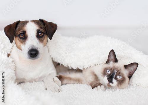 kot-i-pies-razem-pod-bialym-pl