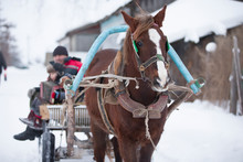 Russian Horse In A Cart Carries Village People