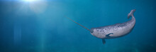 Narwhal, Male Monodon Monoceros Swimming In The Ocean Water