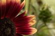 sonnenblumenblätter 21