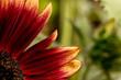 Sonnenblumenblätter