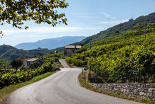 Picturesque Hills With Vineyards Of The Prosecco Sparkling Wine Region In Santo Stefano. Italy.
