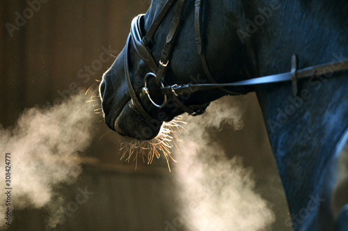 Fototapeta Detail Pferdekopf obraz