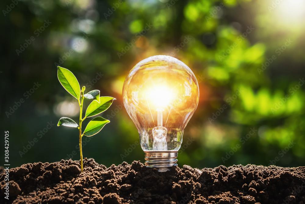 Fototapeta lightbulb tree with sunlight on soil. concept save world and energy power