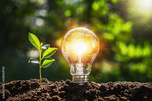 Fototapeta lightbulb tree with sunlight on soil. concept save world and energy power obraz