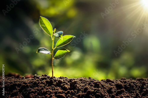 Photo small tree growing with sunshine in garden. eco concept