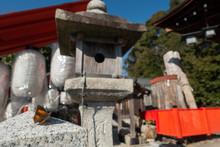 京都、松ヶ崎にある新宮神社の境内の石にとまるウラギンシジミチョウと境内の様子です