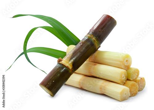 Fotografie, Obraz Single object of sugar cane isolated on white background