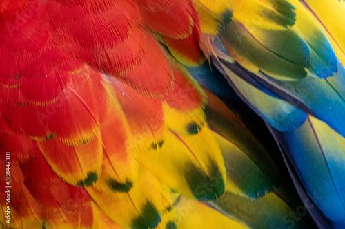 Photo  arara multi colorida em close com lindas penas