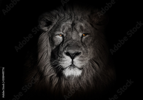 Cuadros en Lienzo bright orange eyes, bleached face lion portrait on a black background