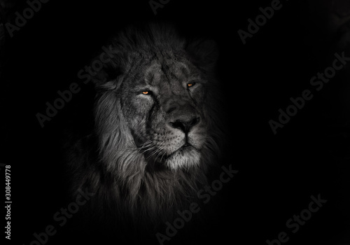 Fototapety, obrazy: bright orange eyes, bleached face lion portrait on a black background. lying around and looking patronizing. powerful lion male with a chic mane consecrated by the sun.