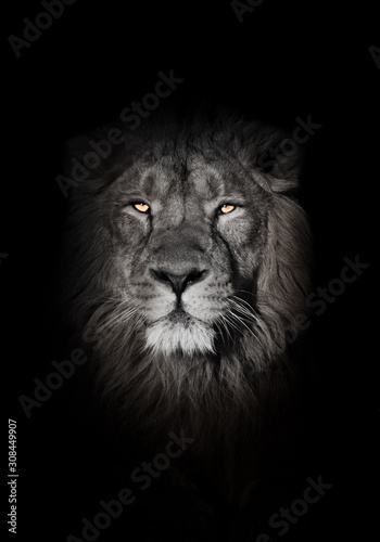 orange eyes, bleached face lion portrait on a black background. looks inquiringly. powerful lion male with a chic mane consecrated by the sun.