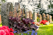 Curved Row Of Grave Stones With Red And Purple Flowers