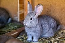 Portrait Of Silver Rabbit