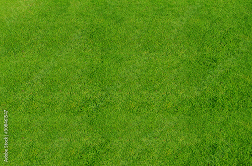 Green grass pattern and texture for background. Close-up - 308461547