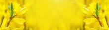 Beautiful Yellow Flowering For...