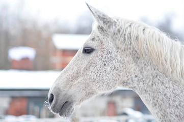 Portrait of a horse on a frosty day