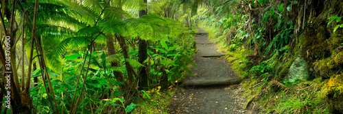 Fototapeta Lush rainforest in Volcanoes National Park Big Island Hawaii, USA