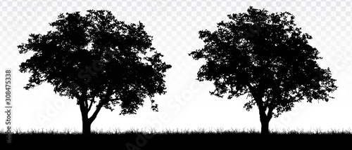 Tablou Canvas Realistic illustration of landscape with deciduous trees or forest, grass and tr